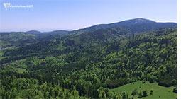 zielone Pilsko