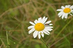 korbielów kwiaty